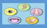 Formation «Profils sensoriels et perceptifs ciblés pour intervenir au quotidien : identifier, comprendre, agir et relayer (stage F56) dispensée par EDI formation   - Du 29/06 au 03/07/2020 - CRANSE UFIRR/IOS